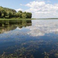 Волжские заливы :: Владимир Сквирский