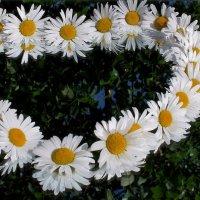 Ромашка - символ семьи, любви и верности :: Нина северянка