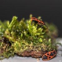 Из жизни насекомых :: Татьяна Симонова