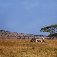 В ожидании новых приключений...Танзания! :: Александр Вивчарик