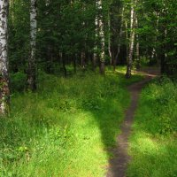 Мой Измайловский парк в июле :: Андрей Лукьянов
