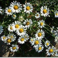 Все цветы для Вас !!! :: Лидия (naum.lidiya)
