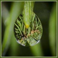 капли дождя :: ник. петрович земцов