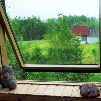 дождливое утро :: Наталия Рискина