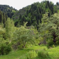 весна в горах :: Горный турист Иван Иванов