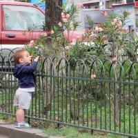 Маленький любитель красоты :: Наталья Джикидзе (Берёзина)