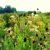 цветы родного края :: Elina Bagi