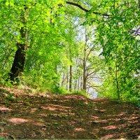 Тропинка в лесу :: Андрей Заломленков