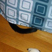 Найди кота. Дубль 1. :: Ольга Васильева