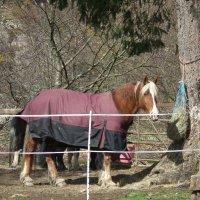 Рабочая лошадь :: Natalia Harries