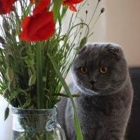 Любитель цветов :: Anna Stepanyuk