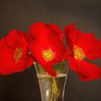 Этюд с цветами шиповника :: Виталий