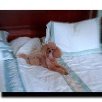 ...да, это мое спальное ложе! :: Олег Каплун