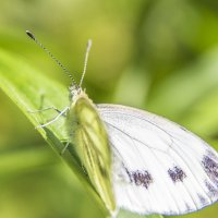 Бабочка :: Albertik Baxton