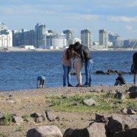 Новые Питерские берега :: sv.kaschuk