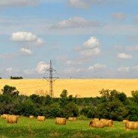 Золотое поле. :: владимир