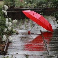 Дождь.... :: Елена