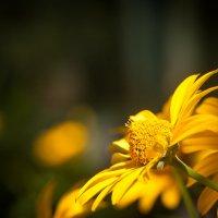 Цветок :: Влад
