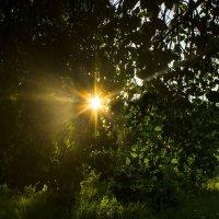 Солнца летнего лучи так приятно горячи... :: Галина Стрельченя