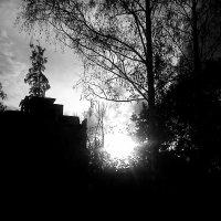 Черно-белое :: Aleksandr Shishin