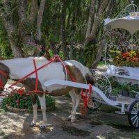 Далат. Парк цветов. :: Виктор Куприянов