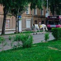 Белая лошади, а позади автобус с солдатами :: Света Кондрашова