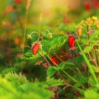 земляничный рай :: Tatsiana Latushko