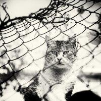 Кошки :: Вадим