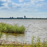 На берегу Разлива :: Виталий
