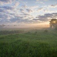 В свежести летнего пробужденья дня. :: Igor Andreev
