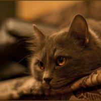 Старый котяра. И очень капризный!!! :: Леон Лакедемон