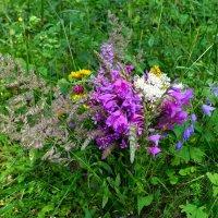 Букет полевых цветов для моих друзей :: Милешкин Владимир Алексеевич