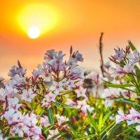 О цветах на закате :: Александр Колесников
