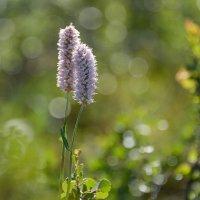 Северные цветочки(2) :: Mc!! .....