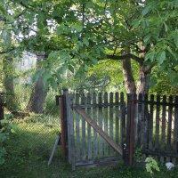 Запущенный сад :: shabof
