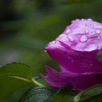 После дождя... :: Tasha Svetlaya