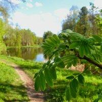 Свежая зелень весны :: Анастасия Белякова