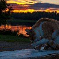 На закате :: Елена Яшнева