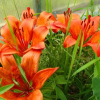 Оранжевые лучики :: Александра Жорова
