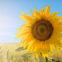 солнце :: Олег Белан