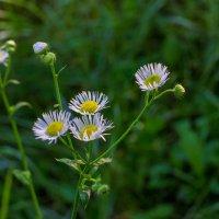 Цветы в лкесу :: Юрий Стародубцев