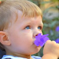 Как пахнет цветок? :: Оля Богданович