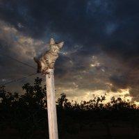 Кошка и вечернее небо :: Оля Богданович