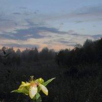 Вечер в лесу :: Сергей Акимов