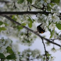 весны творенье :: Василиса