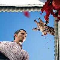 Вот кто съел цветы :: Сахаб Шамилов