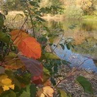 Красный лист,осень :: марина ковшова