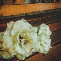 розы :: Natalia SabliNA