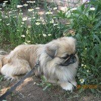 Моя любимая собака :: марина ковшова