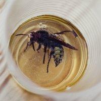 утопиться в стакане!!! алкоголь убивает!!! :: Yana Odintsova